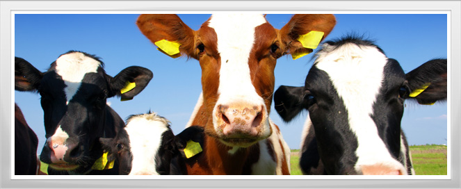 Cattle Management Apprenticeship Program