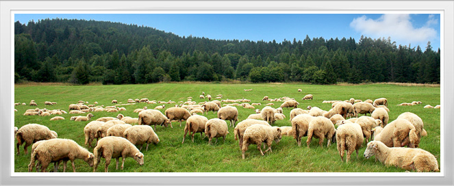 Sheep Management Apprenticeship Program